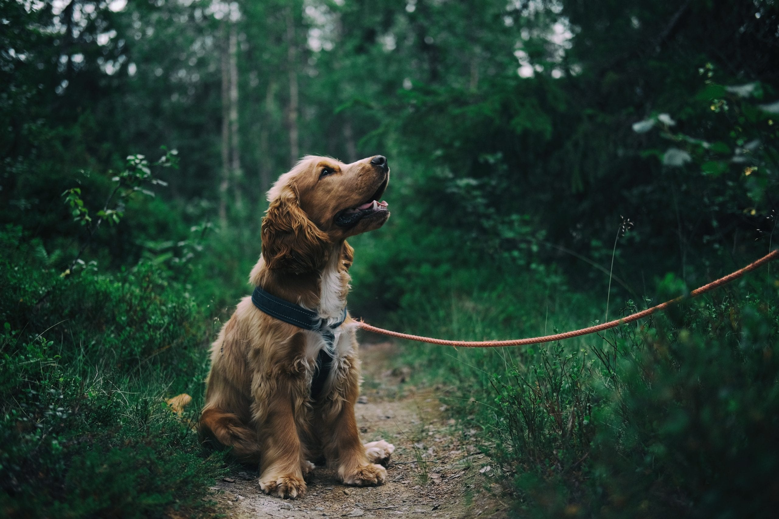 Picture of dog in park on leash